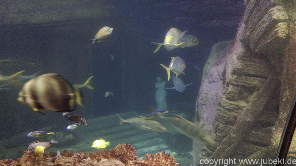 Meerwasseraquarien