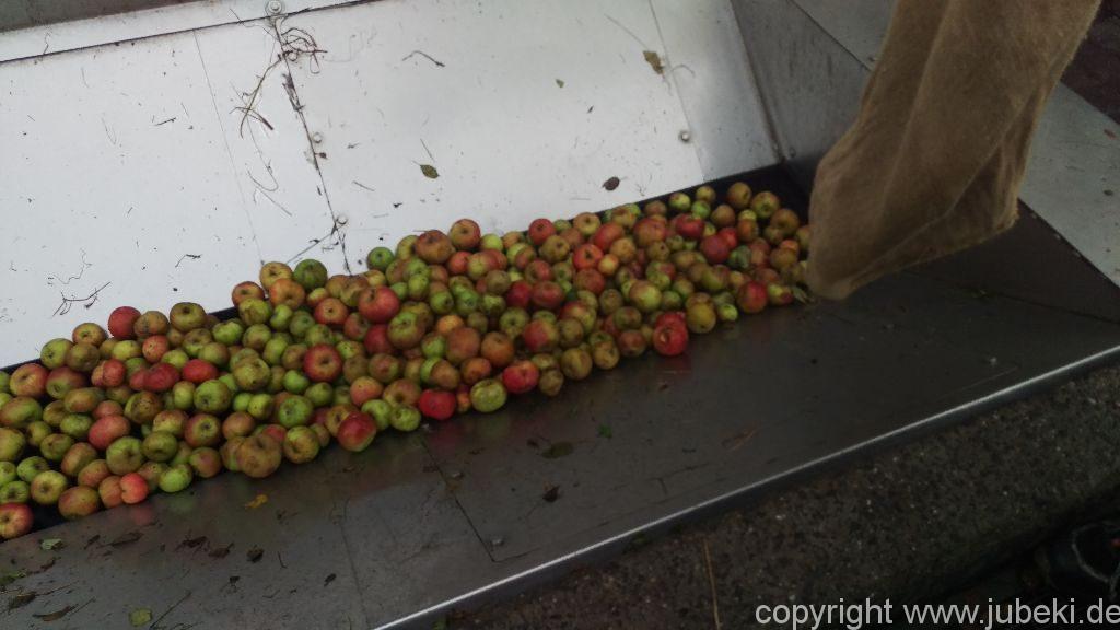 Äpfel lesen