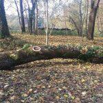 Schloßpark Krokodilsbaum