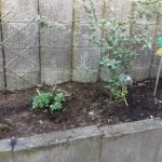 Garten März 2017