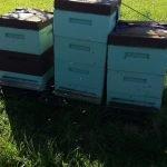 Bienen und Garten