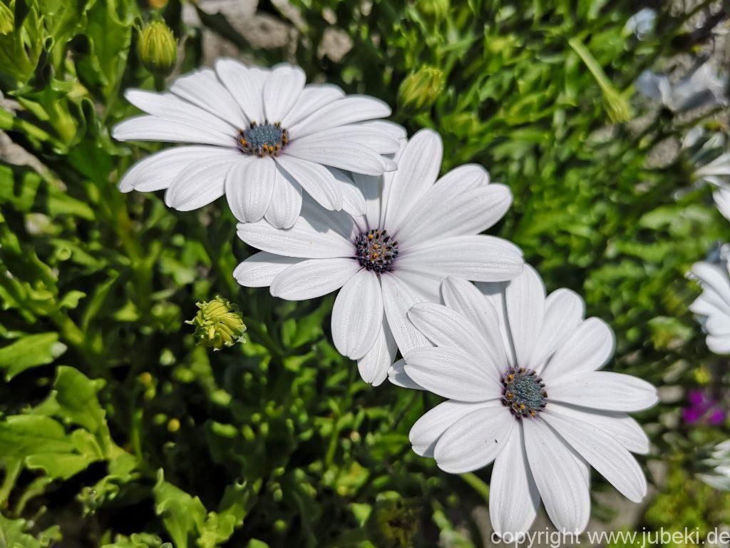 Pflanzen Queerbeet