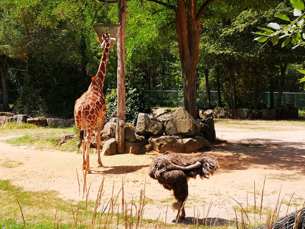 Tiergarten Zoo